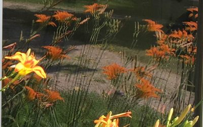 Tiger Lily: Reflections of God's Love
